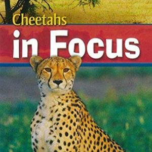 (Cheetahs in Focus) By Rob Waring (Author) Paperback on (May , 2009)